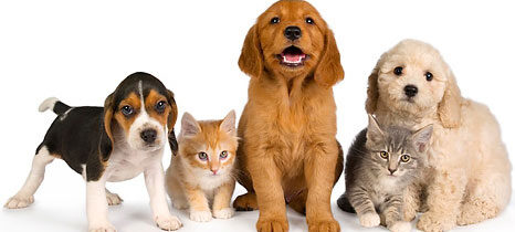 Basic First Aid for Pets