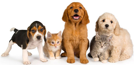 basic first aid for pets first aid training class
